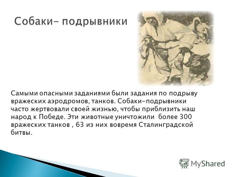Самыми опасными заданиями были задания по подрыву вражеских аэродромов, танков. Собаки-подрывники часто жертвовали своей жизнью, чтобы приблизить наш народ к Победе. Эти животные уничтожили более 300 вражеских танков, 63 из них вовремя Сталинградской