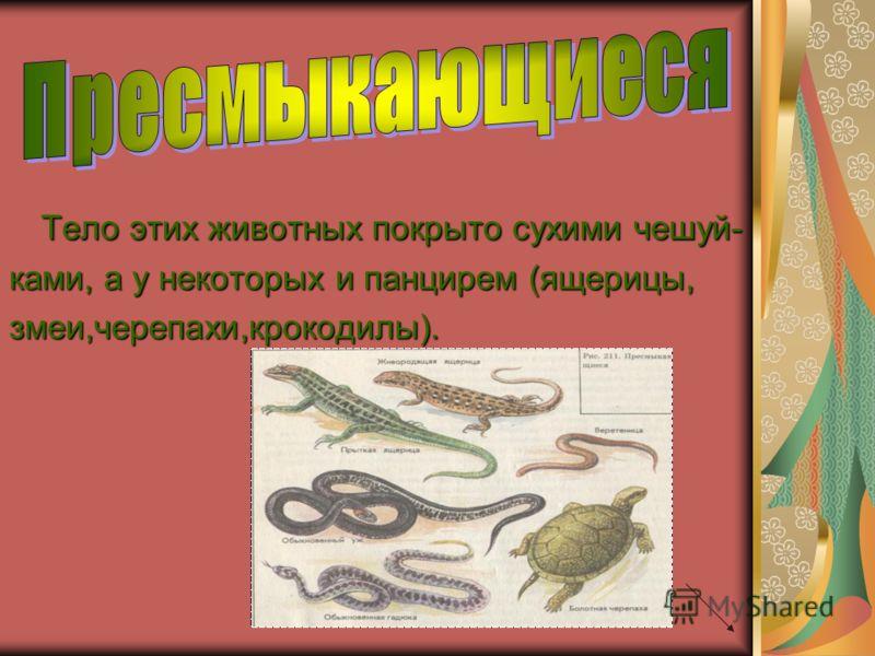 Тело этих животных покрыто сухими чешуй- ками, а у некоторых и панцирем (ящерицы, змеи,черепахи,крокодилы).