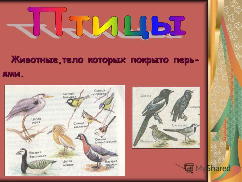 Животные,тело которых покрыто перь- ями.