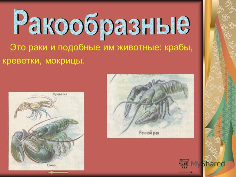 Это раки и подобные им животные: крабы, креветки, мокрицы.