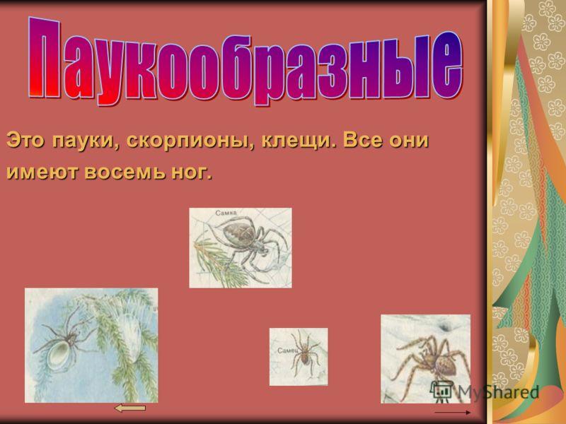 Это пауки, скорпионы, клещи. Все они имеют восемь ног.