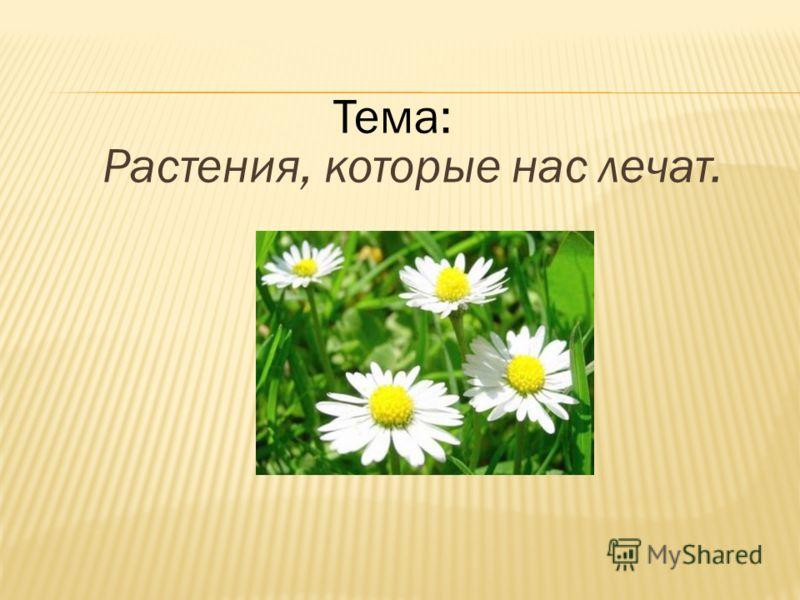 Растения, которые нас лечат. Тема: