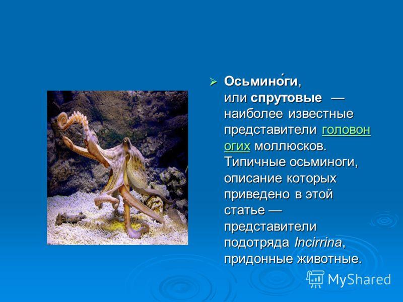 Осьмино́ги, или спрутовые наиболее известные представители головон огих моллюсков. Типичные осьминоги, описание которых приведено в этой статье представители подотряда Incirrina, придонные животные. Осьмино́ги, или спрутовые наиболее известные предст
