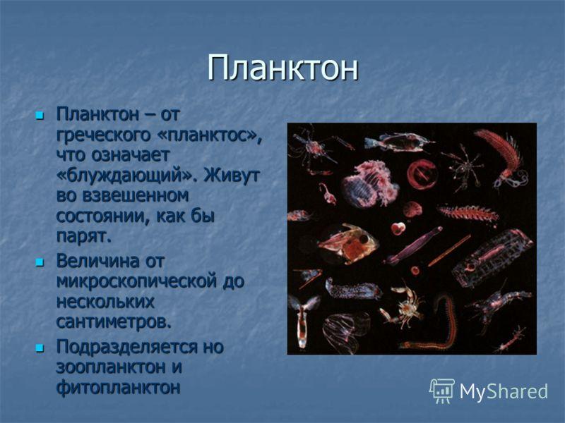 Планктон Планктон – от греческого «планктос», что означает «блуждающий». Живут во взвешенном состоянии, как бы парят. Планктон – от греческого «планктос», что означает «блуждающий». Живут во взвешенном состоянии, как бы парят. Величина от микроскопич