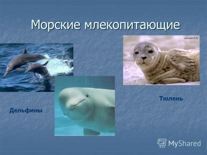 Морские млекопитающие Морские млекопитающие Дельфины Тюлень