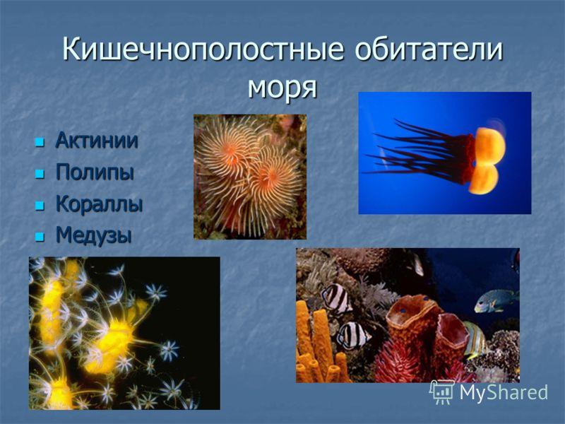 Кишечнополостные обитатели моря Актинии Актинии Полипы Полипы Кораллы Кораллы Медузы Медузы