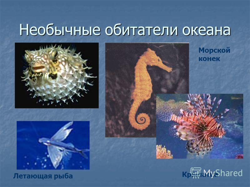Необычные обитатели океана Летающая рыба Морской конек Крылатка