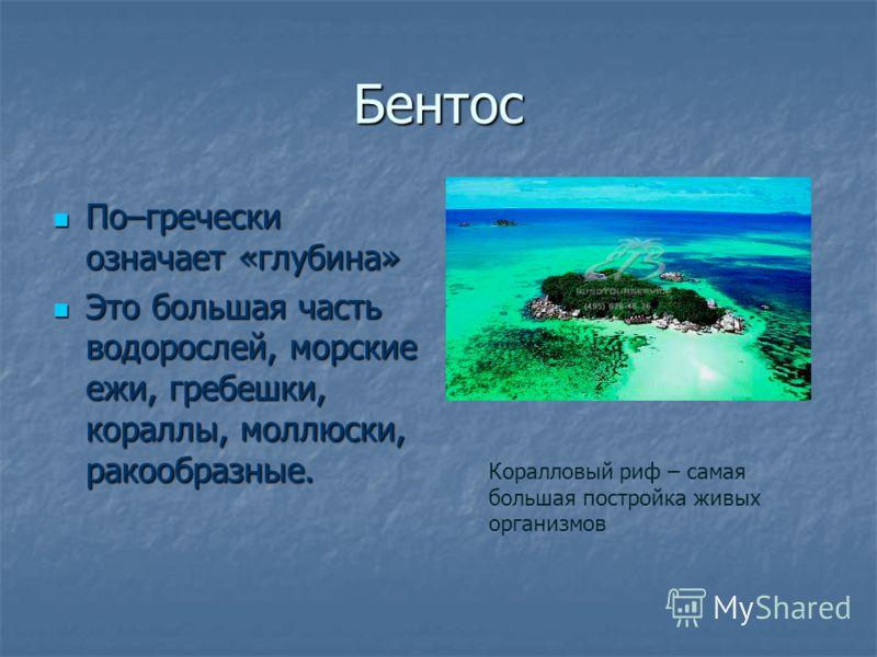 Бентос По–гречески означает «глубина» По–гречески означает «глубина» Это большая часть водорослей, морские ежи, гребешки, кораллы, моллюски, ракообразные. Это большая часть водорослей, морские ежи, гребешки, кораллы, моллюски, ракообразные. Коралловы