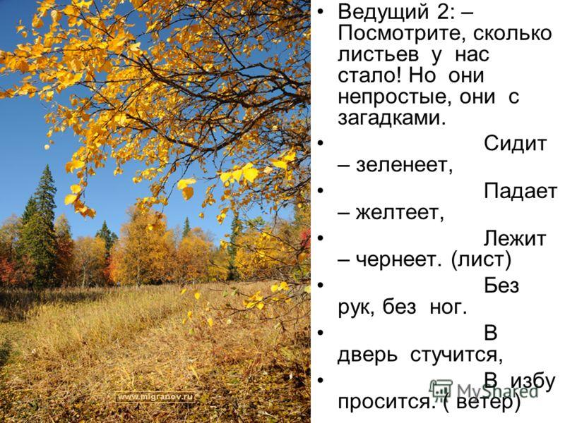 Ведущий 2: – Посмотрите, сколько листьев у нас стало! Но они непростые, они с загадками. Сидит – зеленеет, Падает – желтеет, Лежит – чернеет. (лист) Без рук, без ног. В дверь стучится, В избу просится. ( ветер)