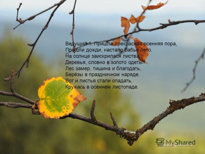 Ведущий 1: Пришла прекрасная осенняя пора, Прошли дожди, настало бабье лето. На солнце заискрилася листва, Деревья, словно в золото одеты. Лес замер, тишина и благодать, Берёзы в праздничном наряде. Вот и листья стали опадать, Кружась в осеннем листо
