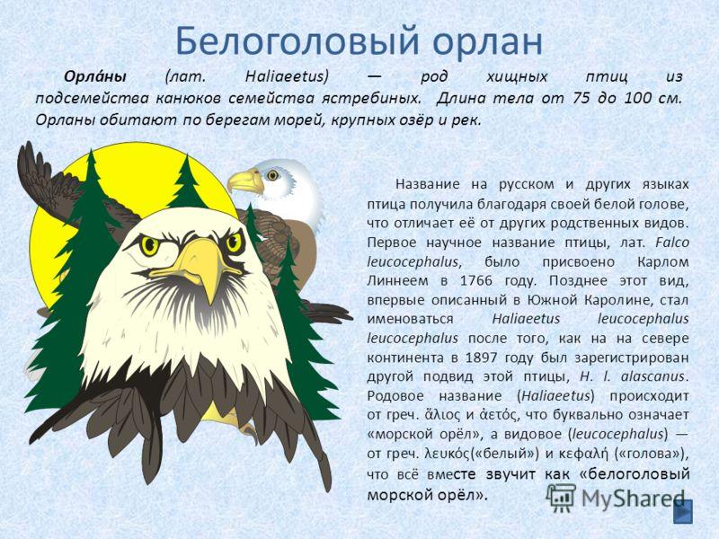 Белоголовый орлан Название на русском и других языках птица получила благодаря своей белой голове, что отличает её от других родственных видов. Первое научное название птицы, лат. Falco leucocephalus, было присвоено Карлом Линнеем в 1766 году. Поздне