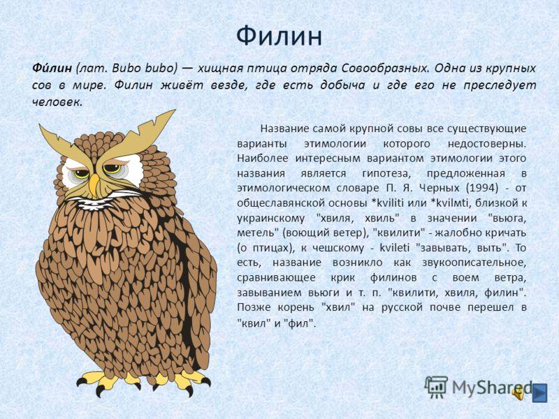 Филин Название самой крупной совы все существующие варианты этимологии которого недостоверны. Наиболее интересным вариантом этимологии этого названия является гипотеза, предложенная в этимологическом словаре П. Я. Черных (1994) - от общеславянской ос