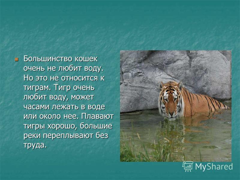 Большинство кошек очень не любит воду. Но это не относится к тиграм. Тигр очень любит воду, может часами лежать в воде или около нее. Плавают тигры хорошо, большие реки переплывают без труда. Большинство кошек очень не любит воду. Но это не относится