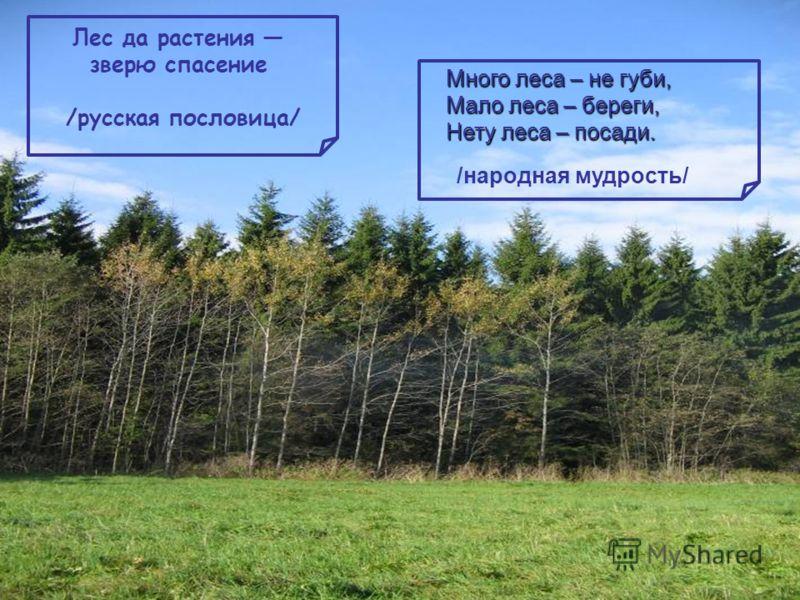 Лес да растения зверю спасение /русская пословица/ Много леса – не губи, Мало леса – береги, Нету леса – посади. /народная мудрость/