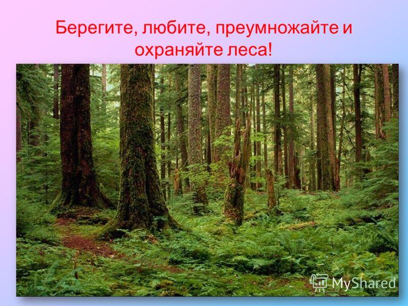 Берегите, любите, преумножайте и охраняйте леса!