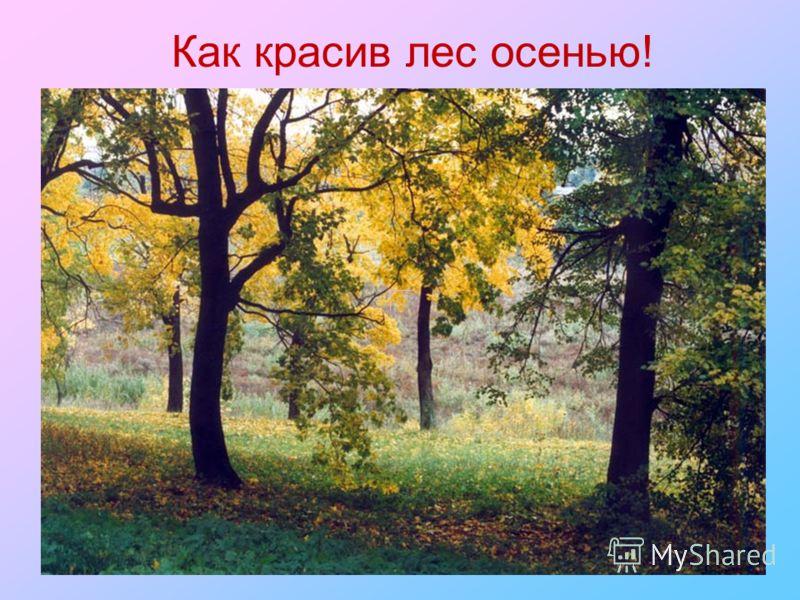 Как красив лес осенью!