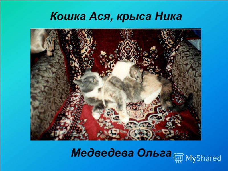 Медведева Ольга Кошка Ася, крыса Ника