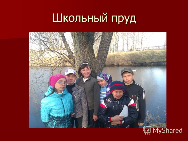 Школьный пруд