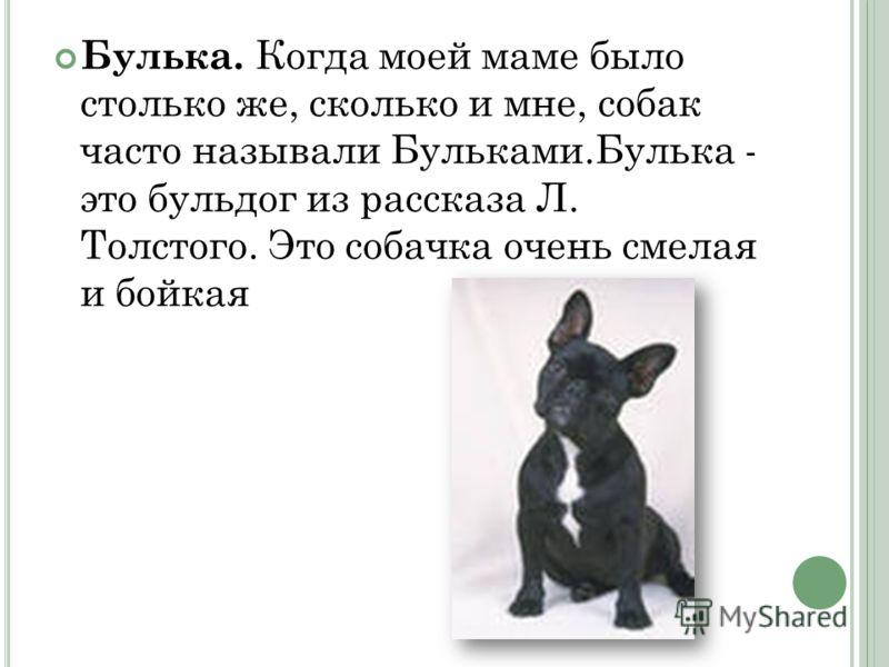 Булька. Когда моей маме было столько же, сколько и мне, собак часто называли Бульками.Булька - это бульдог из рассказа Л. Толстого. Это собачка очень смелая и бойкая