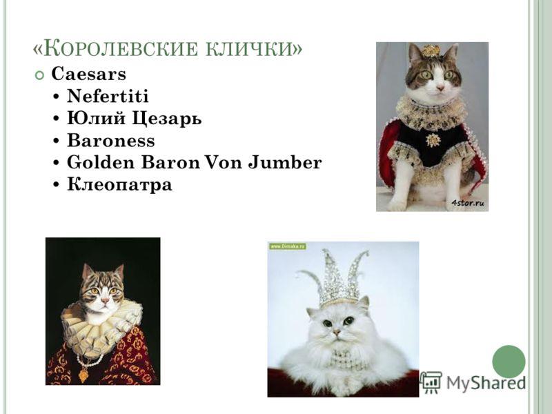 «К ОРОЛЕВСКИЕ КЛИЧКИ » Caesars Nefertiti Юлий Цезарь Baroness Golden Baron Von Jumber Клеопатра