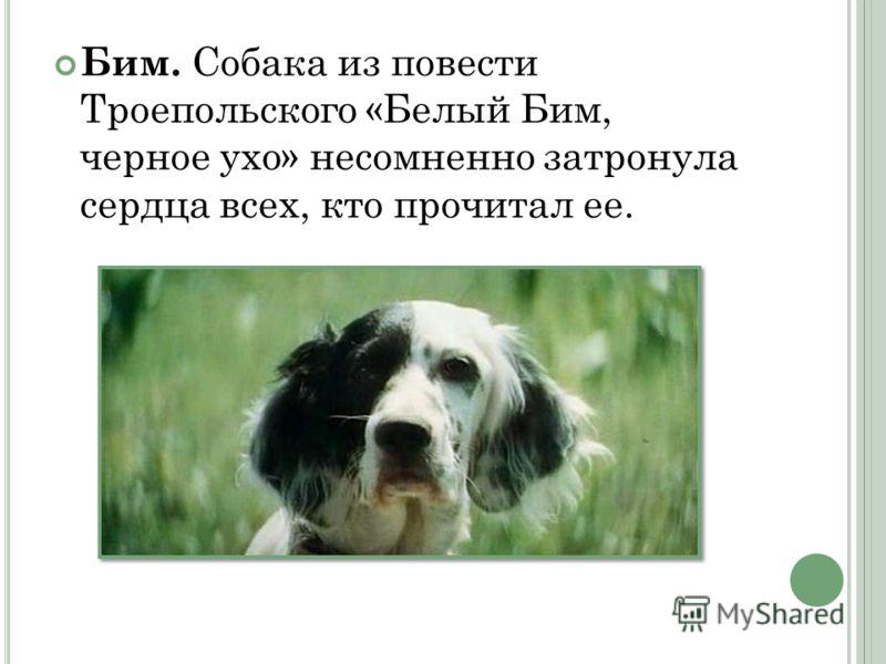 Бим. Собака из повести Троепольского «Белый Бим, черное ухо» несомненно затронула сердца всех, кто прочитал ее.