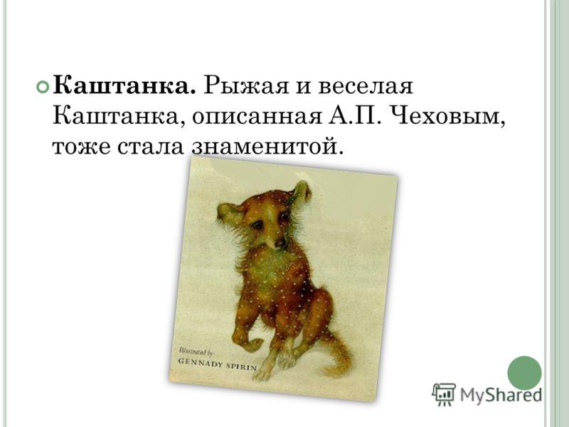 Каштанка. Рыжая и веселая Каштанка, описанная А.П. Чеховым, тоже стала знаменитой.