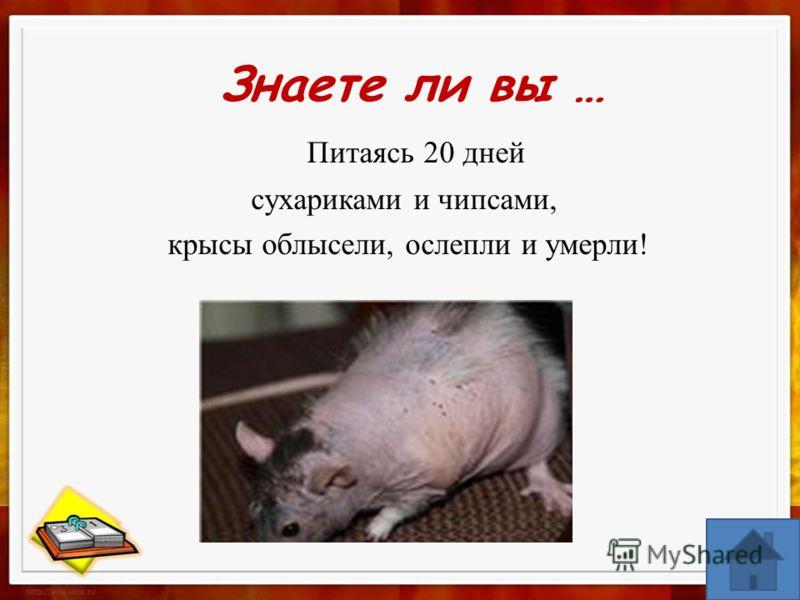 Питаясь 20 дней сухариками и чипсами, крысы облысели, ослепли и умерли! Знаете ли вы …