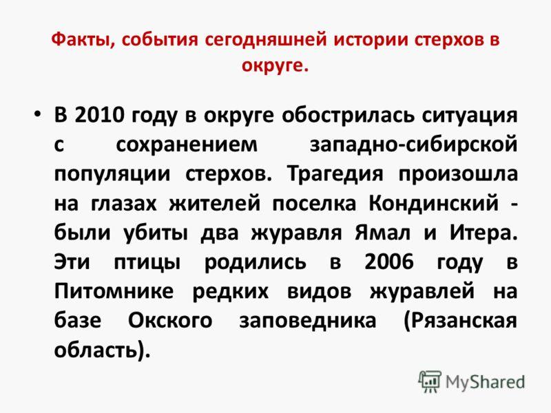 Факты, события сегодняшней истории стерхов в округе. В 2010 году в округе обострилась ситуация с сохранением западно-сибирской популяции стерхов. Трагедия произошла на глазах жителей поселка Кондинский - были убиты два журавля Ямал и Итера. Эти птицы