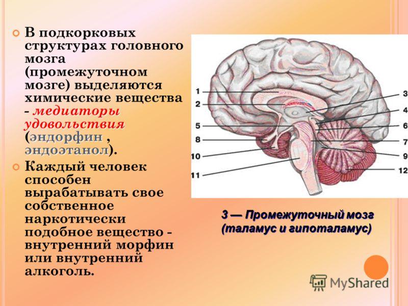 медиаторы удовольствия эндорфин эндоэтанол В подкорковых структурах головного мозга (промежуточном мозге) выделяются химические вещества - медиаторы удовольствия (эндорфин, эндоэтанол). Каждый человек способен вырабатывать свое собственное наркотичес