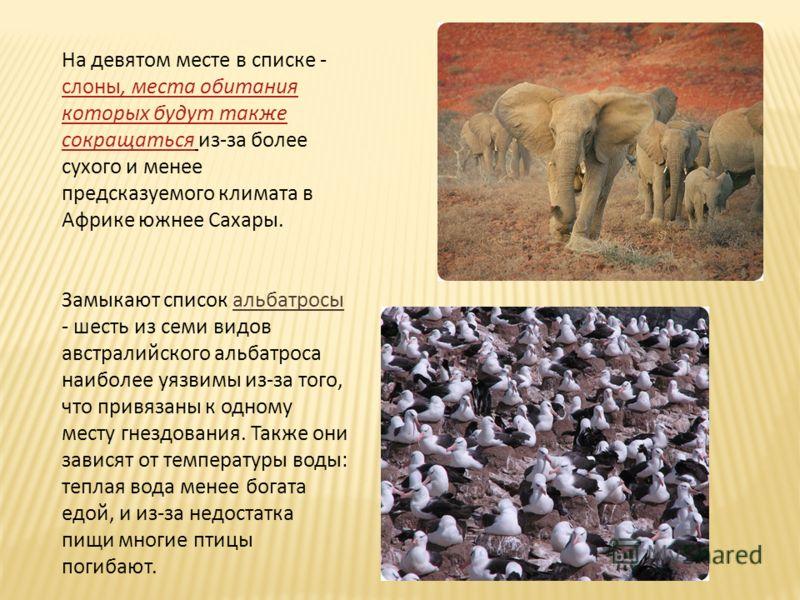 На девятом месте в списке - слоны, места обитания которых будут также сокращаться из-за более сухого и менее предсказуемого климата в Африке южнее Сахары. слоны, места обитания которых будут также сокращаться Замыкают список альбатросы - шесть из сем