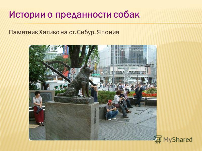 Истории о преданности собак Памятник Хатико на ст.Сибур, Япония
