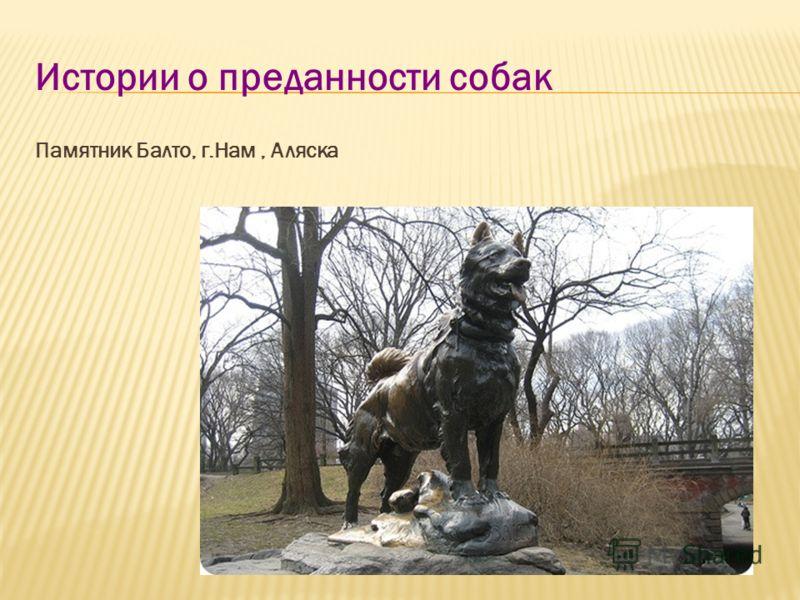 Истории о преданности собак Памятник Балто, г.Нам, Аляска
