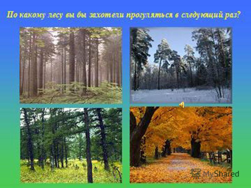 Природное сообщество лес.