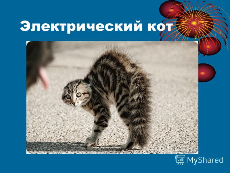 Электрический кот