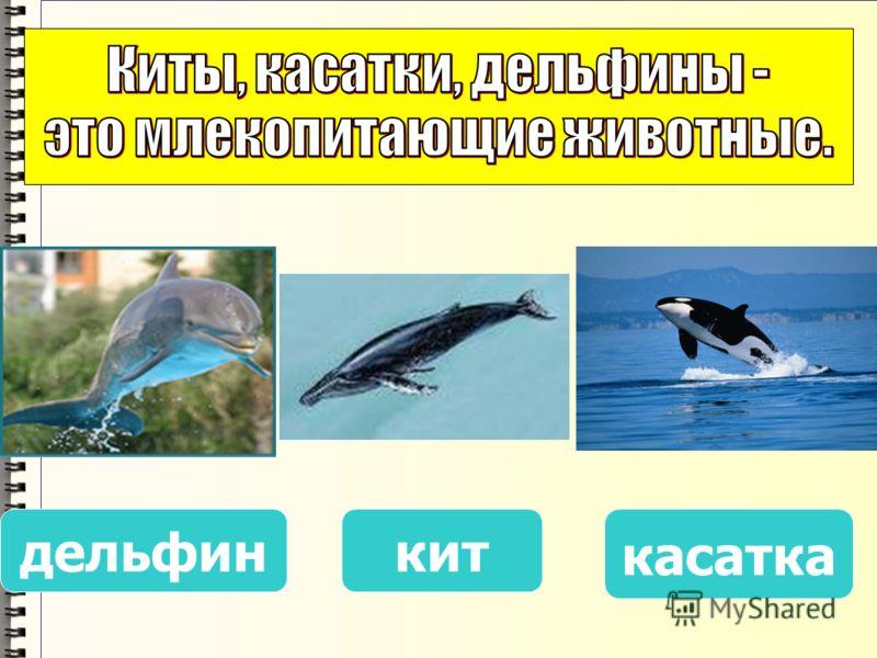китдельфин касатка