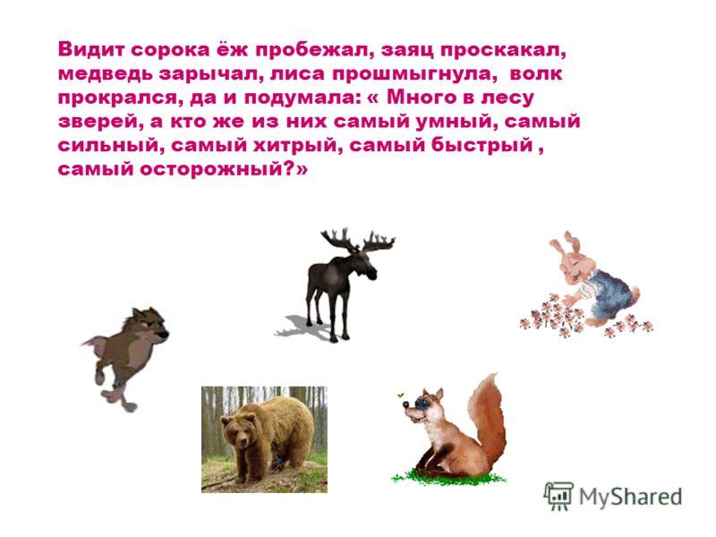 Видит сорока ёж пробежал, заяц проскакал, медведь зарычал, лиса прошмыгнула, волк прокрался, да и подумала: « Много в лесу зверей, а кто же из них самый умный, самый сильный, самый хитрый, самый быстрый, самый осторожный?»