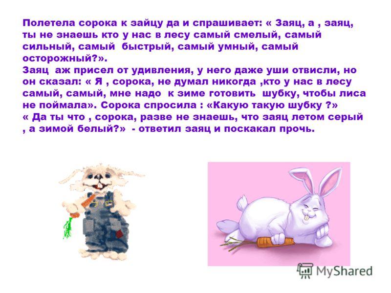 Полетела сорока к зайцу да и спрашивает: « Заяц, а, заяц, ты не знаешь кто у нас в лесу самый смелый, самый сильный, самый быстрый, самый умный, самый осторожный?». Заяц аж присел от удивления, у него даже уши отвисли, но он сказал: « Я, сорока, не д