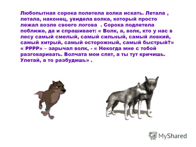 Любопытная сорока полетела волка искать. Летала, летала, наконец, увидела волка, который просто лежал возле своего логова. Сорока подлетела поближе, да и спрашивает: « Волк, а, волк, кто у нас в лесу самый смелый, самый сильный, самый ловкий, самый х