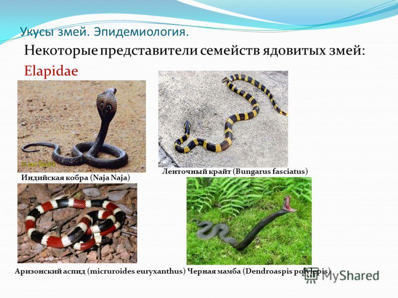 Укусы змей. Эпидемиология. Некоторые представители семейств ядовитых змей: Elapidae Индийская кобра (Naja Naja) Ленточный крайт (Bungarus fasciatus) Аризонский аспид (micruroides euryxanthus)Черная мамба (Dendroaspis polylepis)