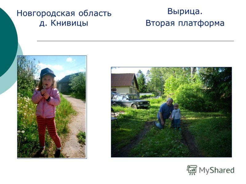 Новгородская область д. Книвицы Вырица. Вторая платформа