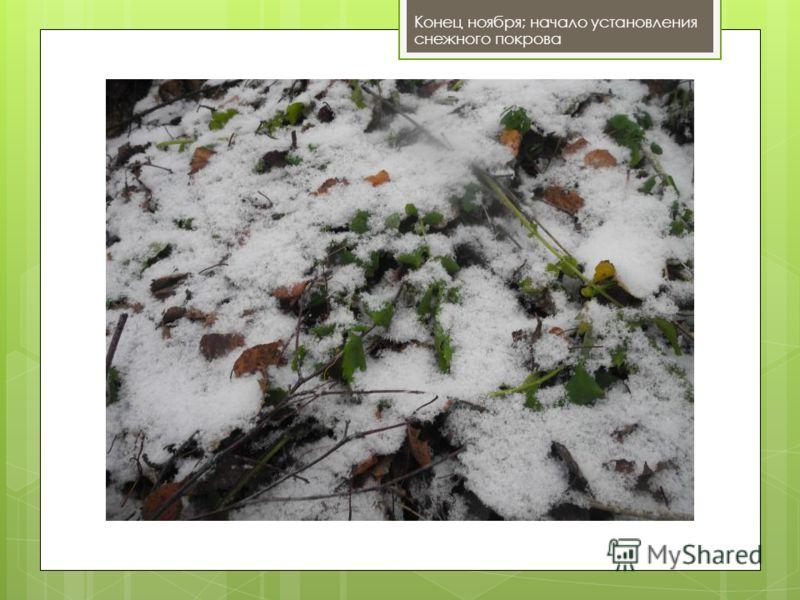Конец ноября; начало установления снежного покрова