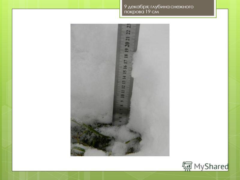 9 декабря; глубина снежного покрова 19 см