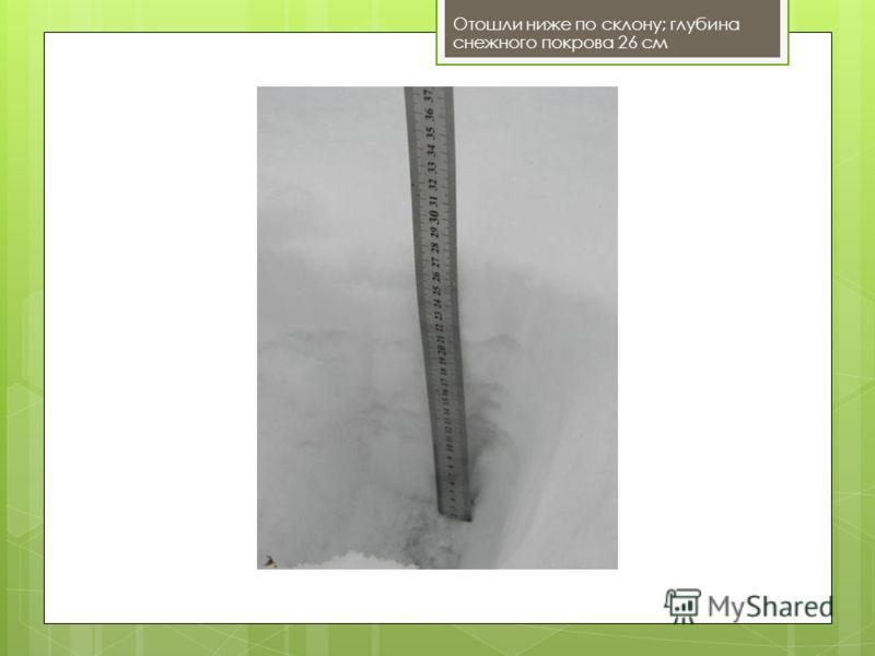 Отошли ниже по склону; глубина снежного покрова 26 см