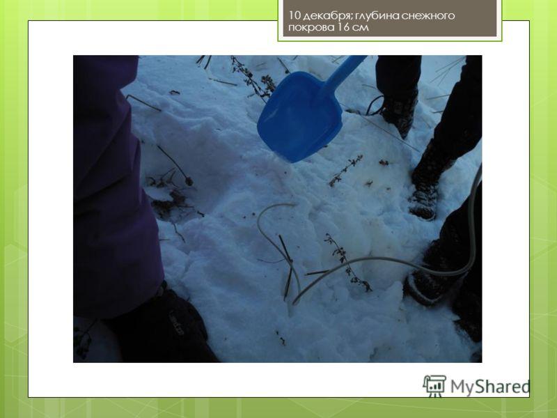 10 декабря; глубина снежного покрова 16 см