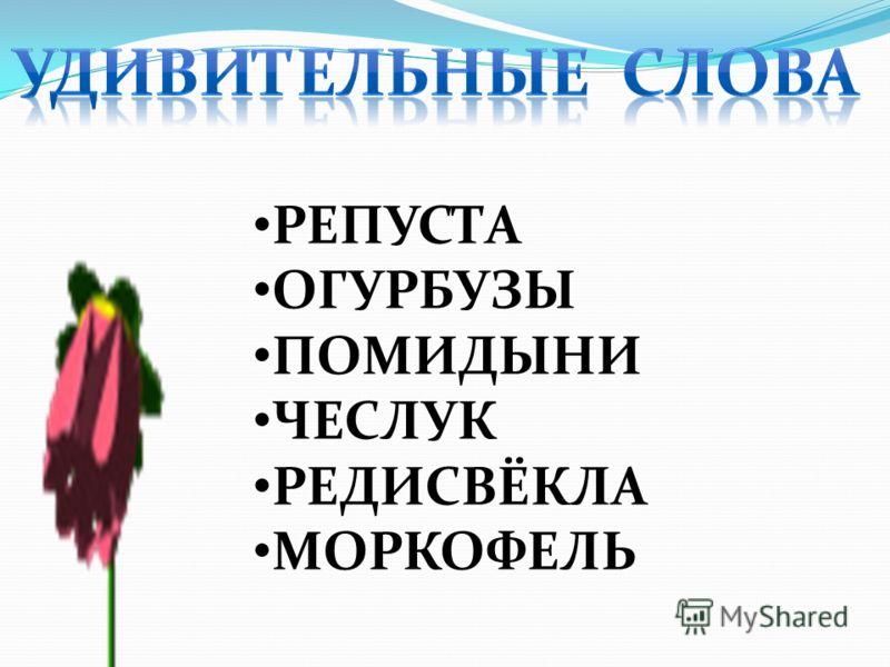 РЕПУСТА ОГУРБУЗЫ ПОМИДЫНИ ЧЕСЛУК РЕДИСВЁКЛА МОРКОФЕЛЬ