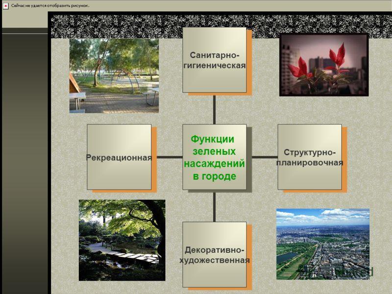 Функции зеленых насаждений в городе Санитарно- гигиеническая Структурно- планировочная Декоративно- художественная Рекреационная