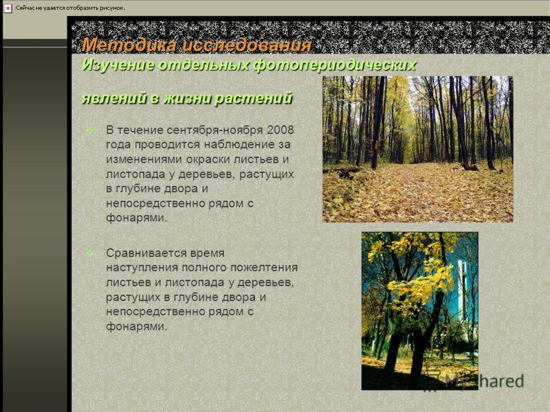 Методика исследования Изучение отдельных фотопериодических явлений в жизни растений В течение сентября-ноября 2008 года проводится наблюдение за изменениями окраски листьев и листопада у деревьев, растущих в глубине двора и непосредственно рядом с фо