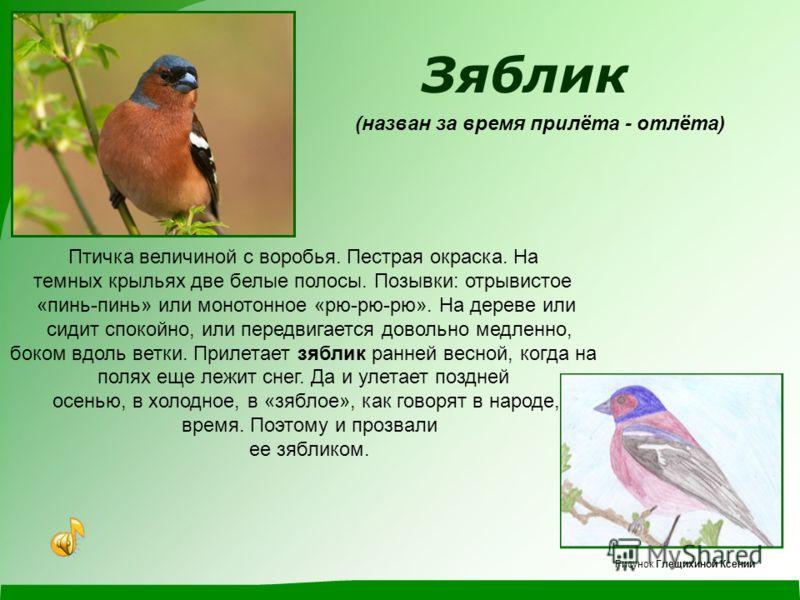 Козодой (назван за предполагаемый способ питания) Странное название перелетная птица козодой получила еще в давние времена. Есть некая история, которая рассказывает о том, что Козодой с наступлением темного времени суток летит туда, где находятся и п