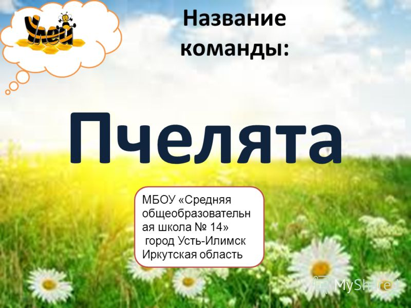 Название команды: Пчелята МБОУ «Средняя общеобразовательн ая школа 14» город Усть-Илимск Иркутская область