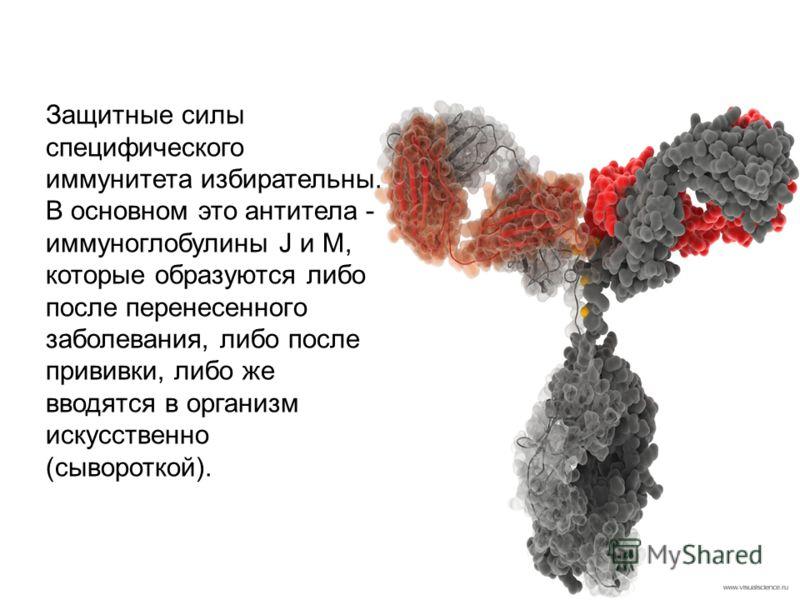 Защитные силы специфического иммунитета избирательны. В основном это антитела - иммуноглобулины J и M, которые образуются либо после перенесенного заболевания, либо после прививки, либо же вводятся в организм искусственно (сывороткой).